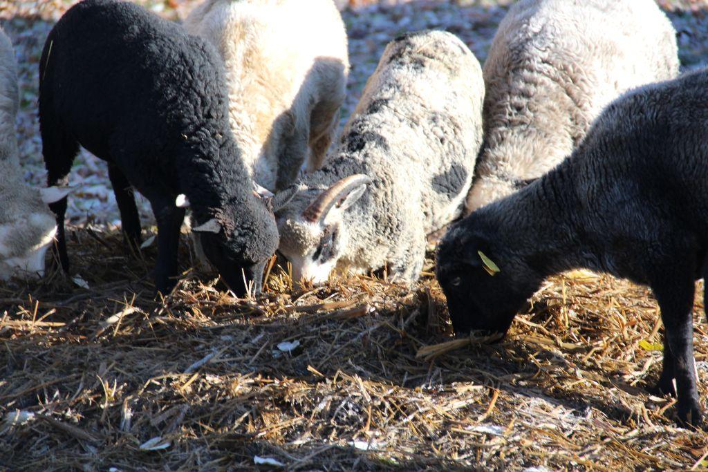 On see kevad või talv või sügis? Foto: Kylauudis.ee