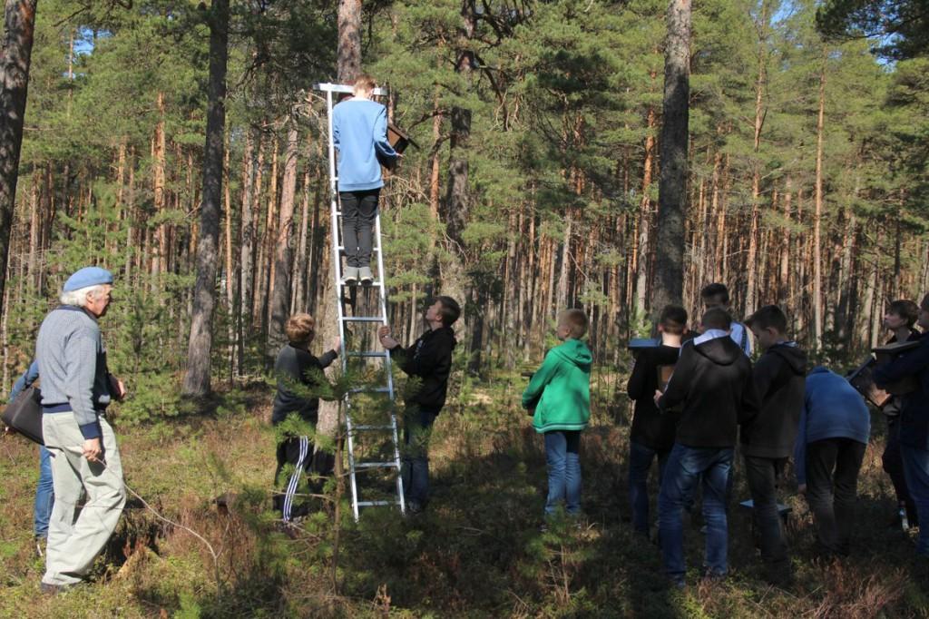 Peskastide paigaldamine Vabaduse parki Foto Jukko Nooni