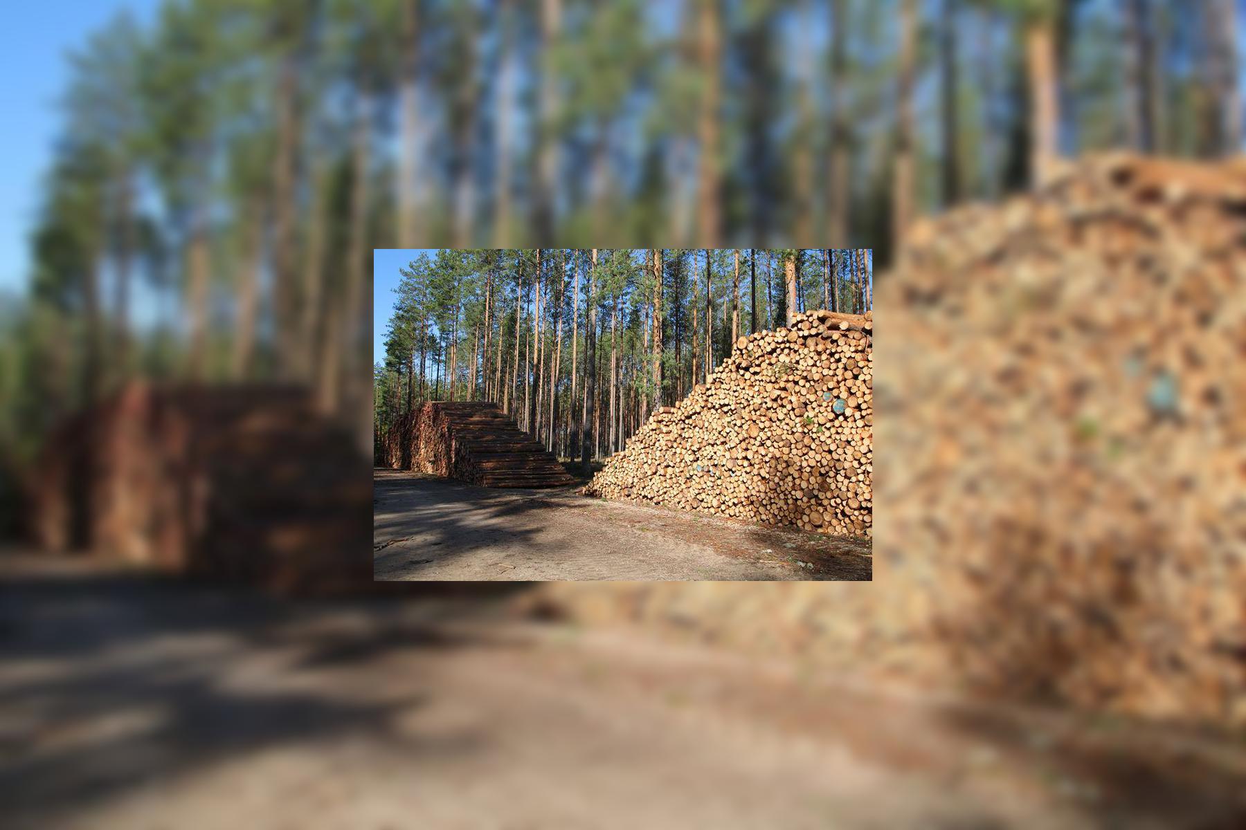 Puiduriit juba toimunud RMK raietest Mustjõe metsise elupaigas