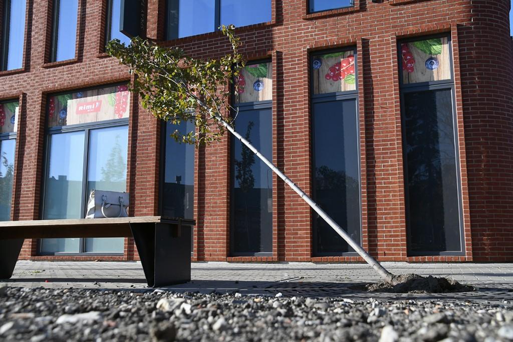 Puu ei osutanud vägevale käterammule vastupanu Foto Urmas Saard