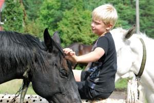 Ristitee talu ratsud enne matkarajale minekut Foto Urmas Saard