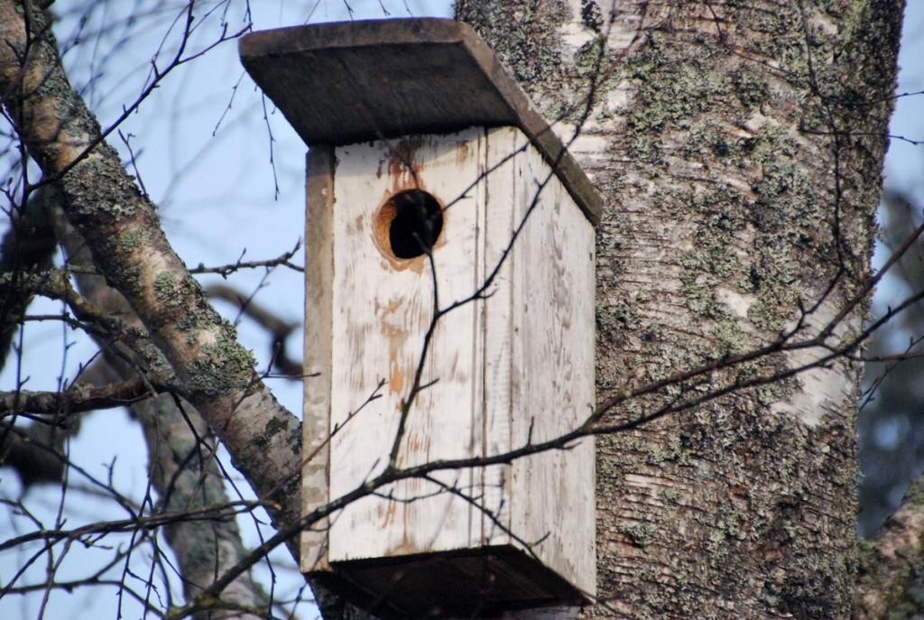 Rogosi mõisas ehitatakse lindudele pesakaste Foto Urmas Saard