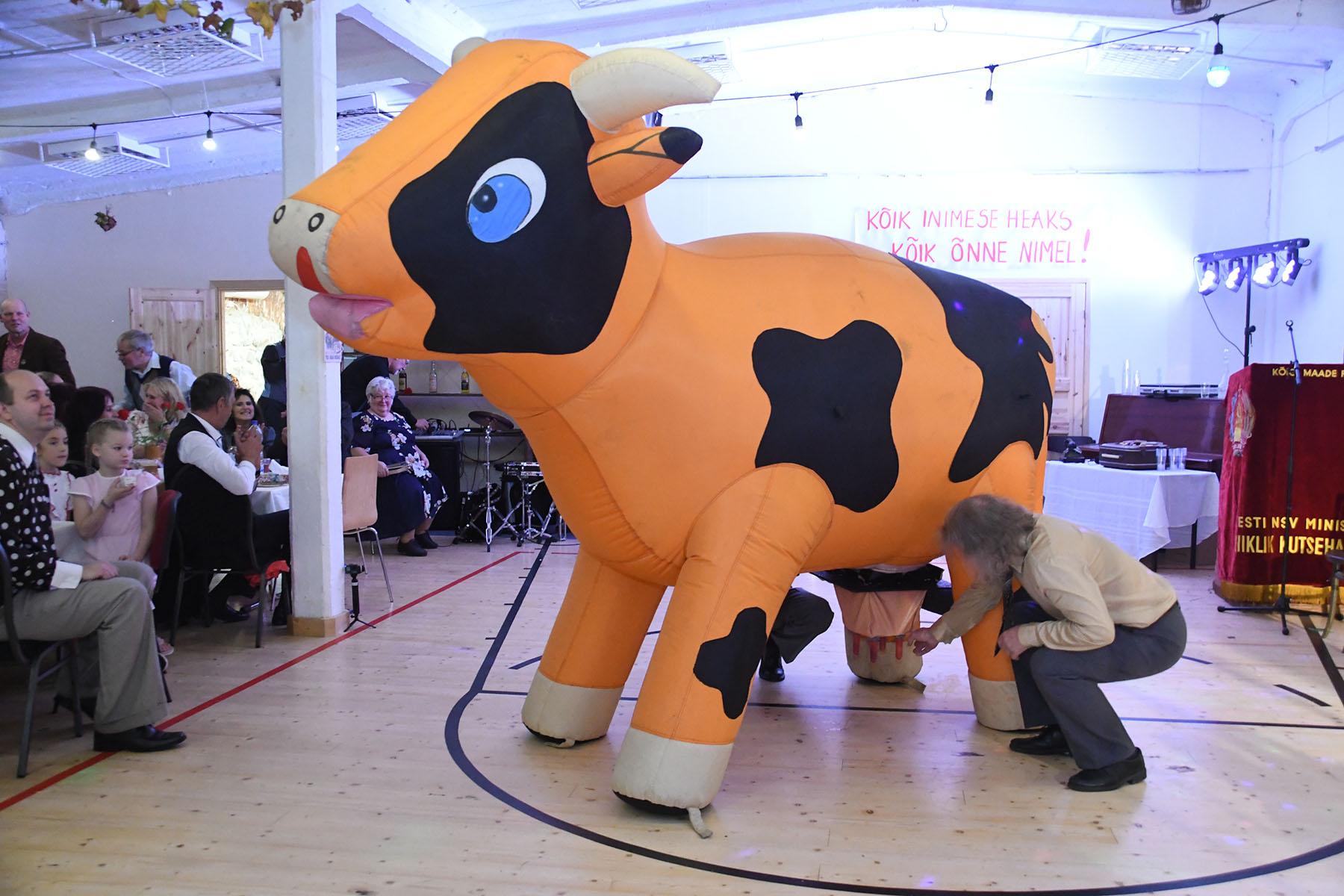 Tõupuhas täispuhutav lehm Karjamõisa kolhoosi lõikuspeol. Foto Urmas Saard