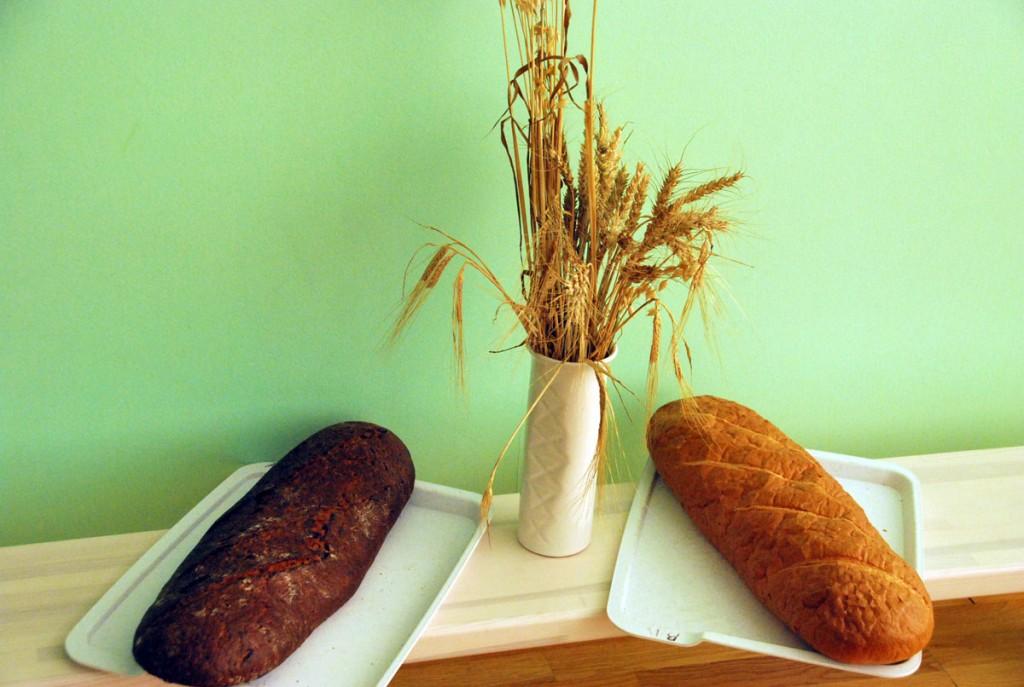 Viljapead, mille teradest valmivad leib ja sai Foto Urmas Saard