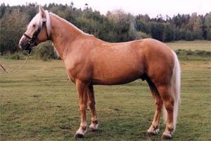 Eesti tõugu hobune. Foto: www.esthorse.ee